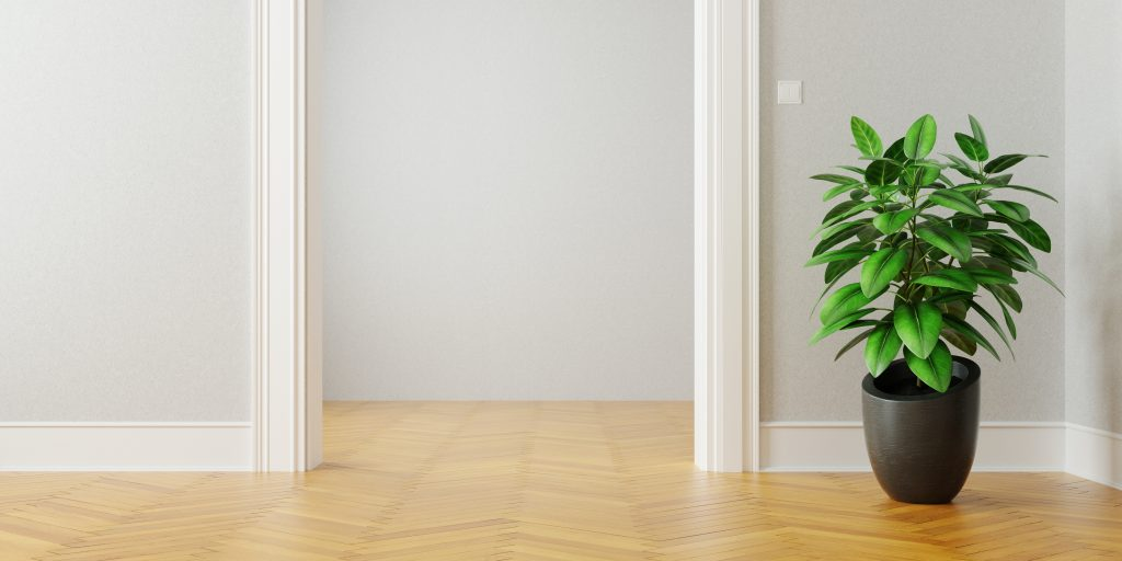 Rubberplant placed by the door