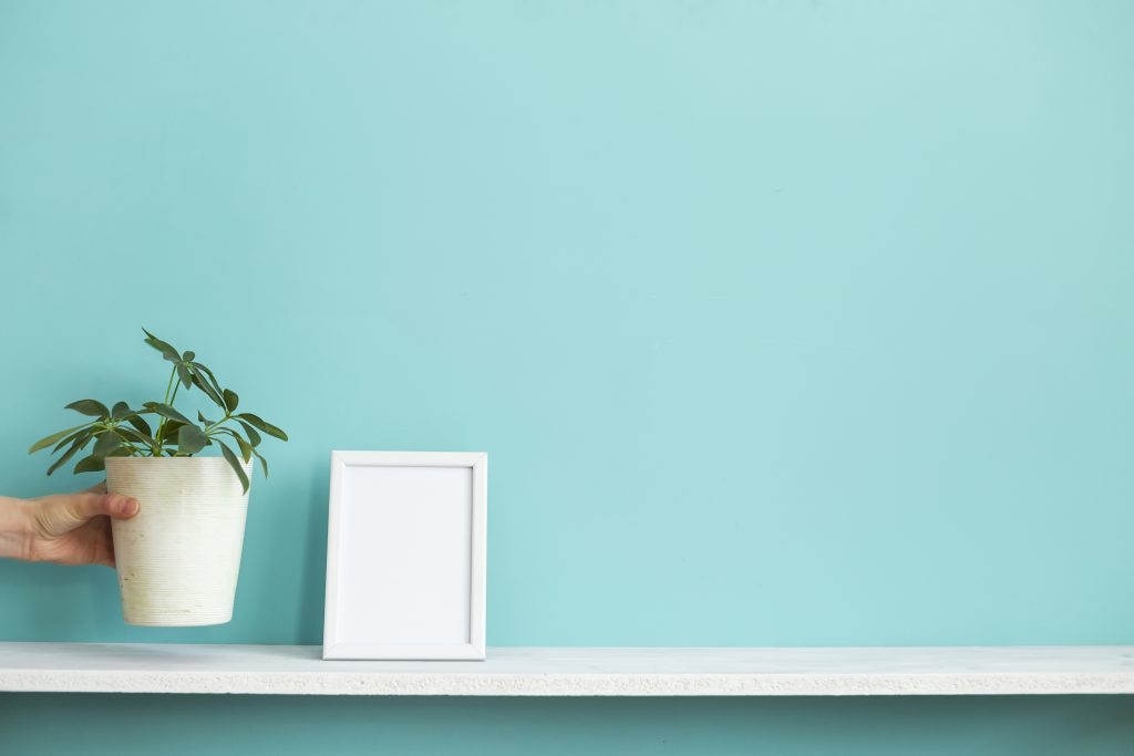 schefflera plant decorated beside a picture frame mock up in isolated teal background